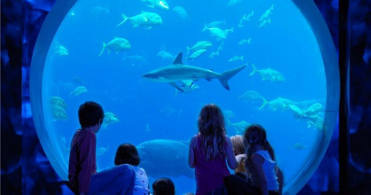the Ultimate Atlantis Dubai Bucket List